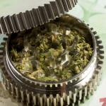 Euro & marijuana in grinder